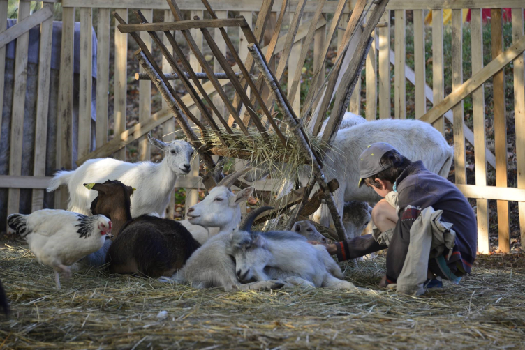 Un petit garçon et des animaux de la ferme