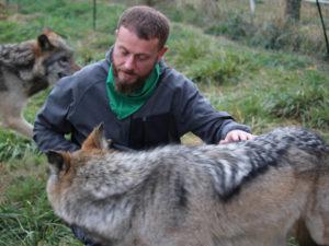 La journée du Loup à la Pyramide du Loup