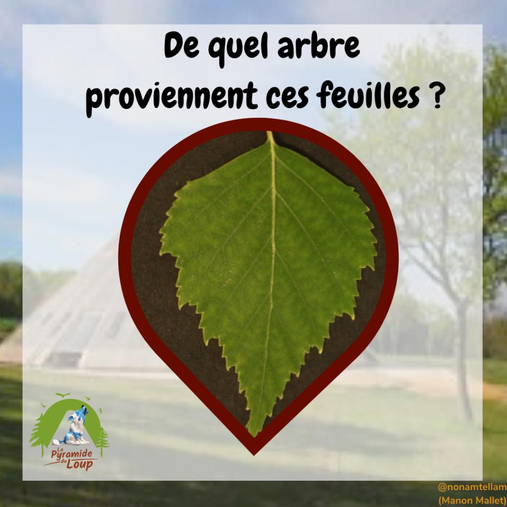 Devine de quel arbre proviennent ces feuilles ?
