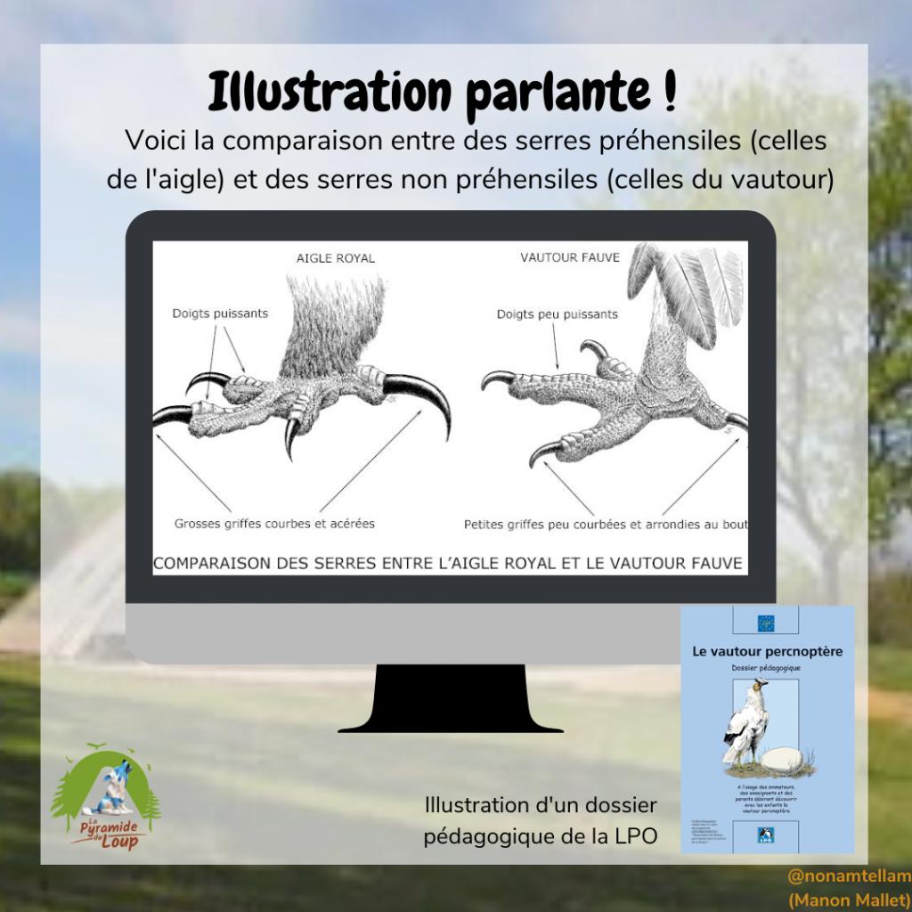Illustration parlante sur le vautour