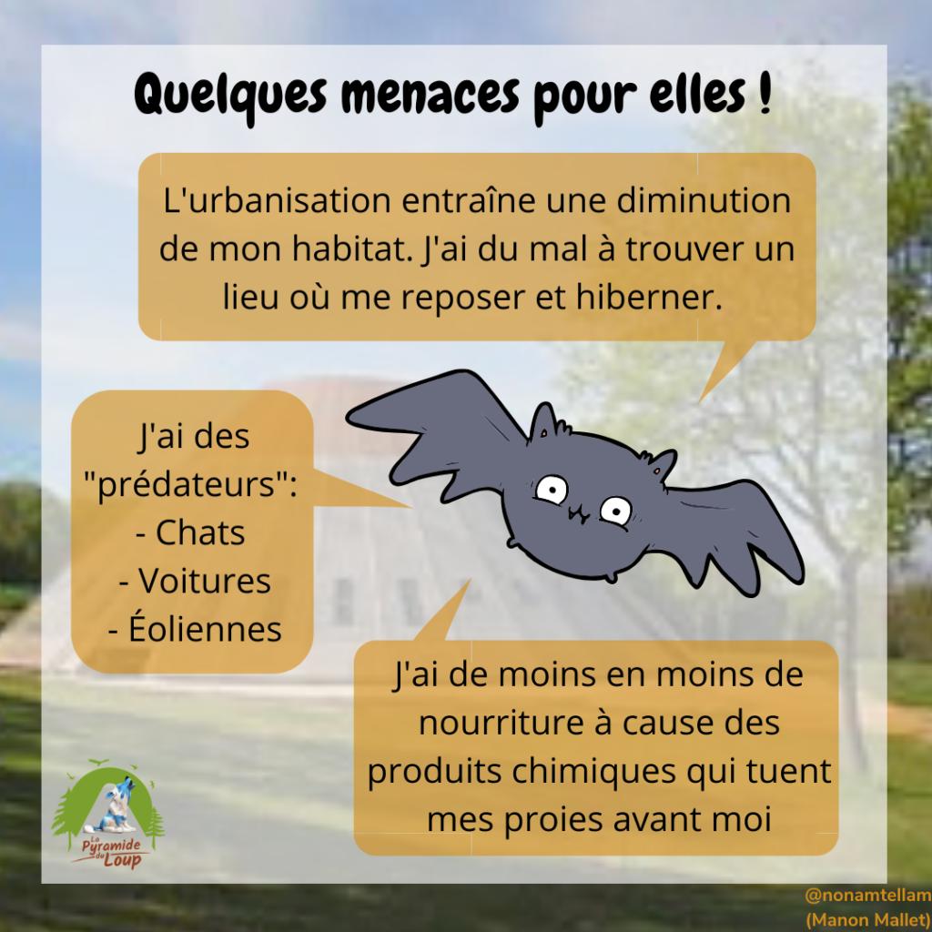 Quelques menaces pour les chauves-souris