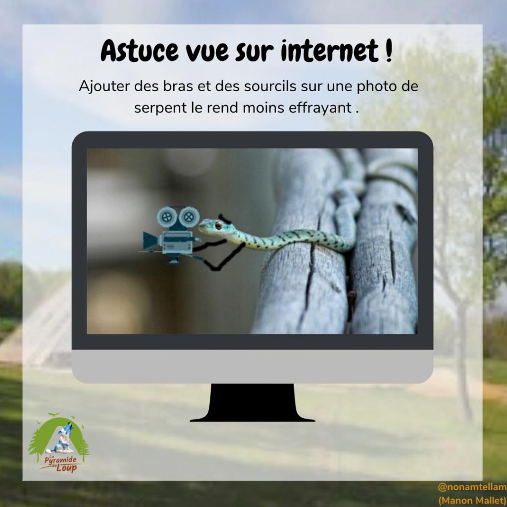 Astuce vue sur internet sur le serpent