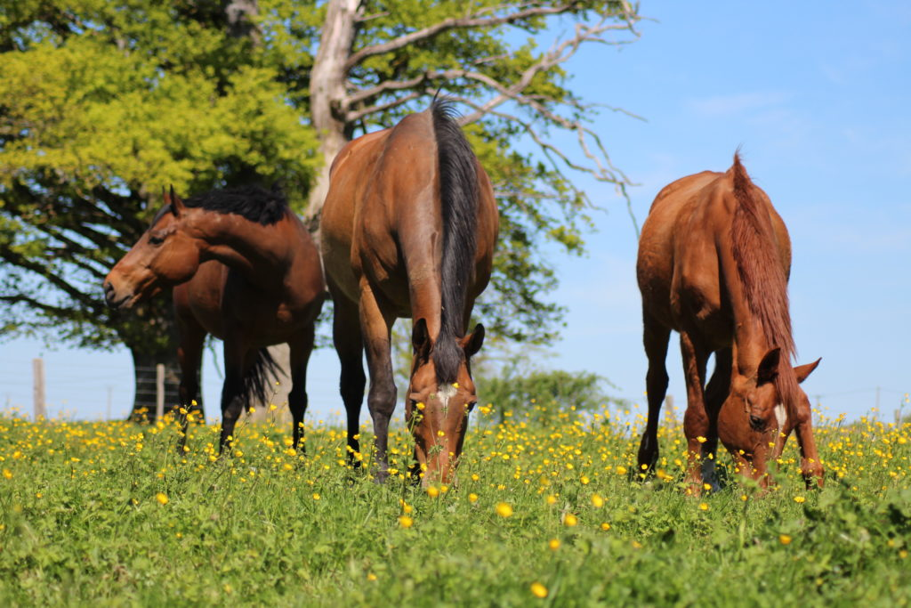 Refuge Equin de Terre Plaine