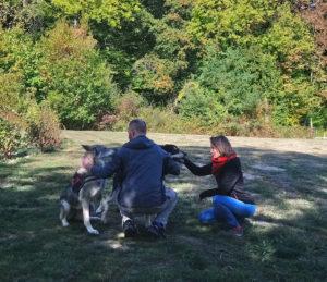 Chien-loup de Saarloos - Pyramide du Loup